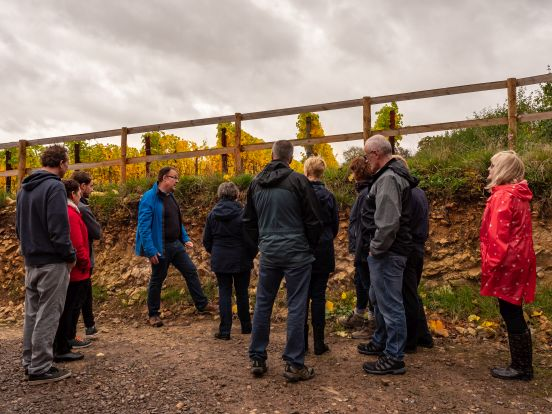 A Taster of our Vineyard Tours
