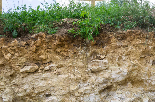 Soil profile at Woodchester